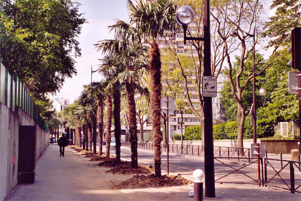 Palmiers rue Curial